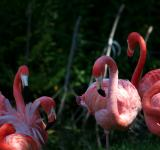 Free Photo - Flamingo birds