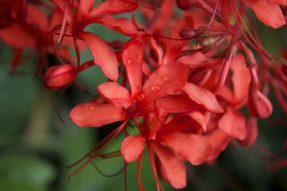 Download Red Plants Free Photo