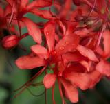 Free Photo - Red Plants
