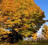 Free Photo - Autumn trees