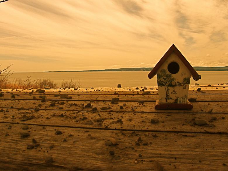 Bird House Free Photo