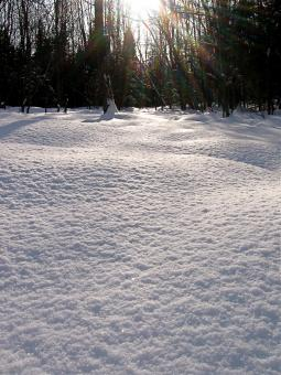 Snow on the ground - Free Stock Photo