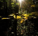 Free Photo - Forest Light