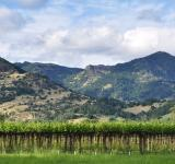 Free Photo - Beautiful Calistoga Vineyard