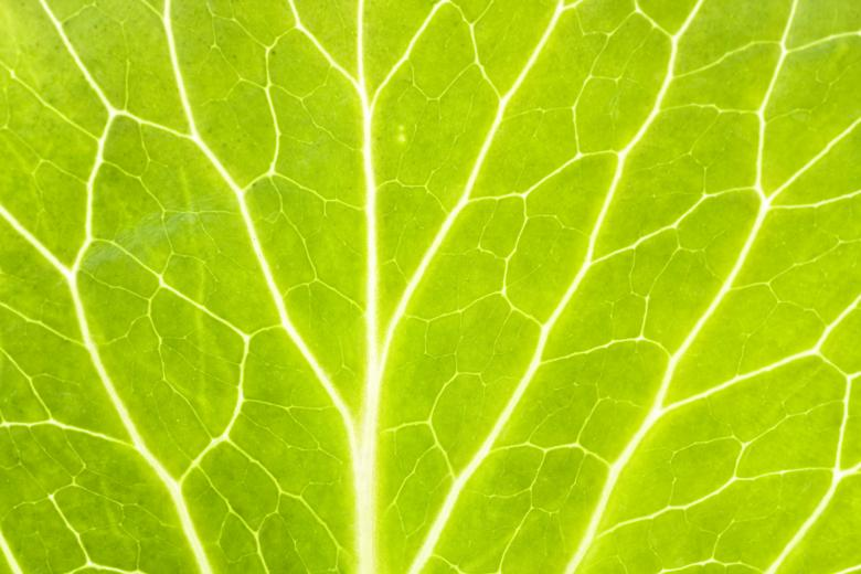 Free Stock Photo of Green Macro Leaf Created by 2happy