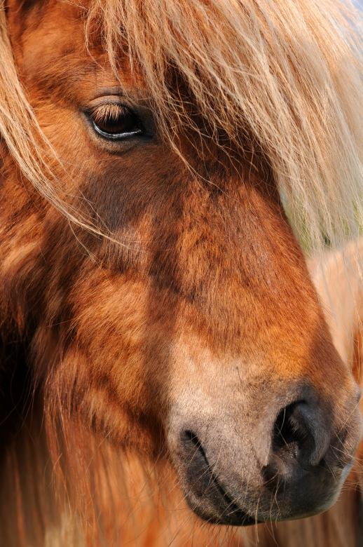 Free Stock Photo of Horse Created by jay simmons