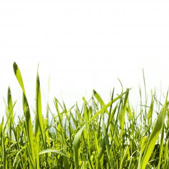 Grass  - Free Stock Photo