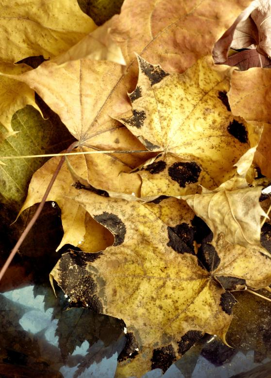 Free Stock Photo of autumn leaves Created by 2happy