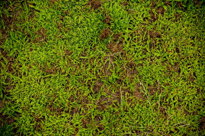 Free Stock Photo of Green Plants Background Created by Bjorgvin