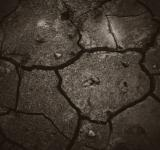 Free Photo - Cracked Dark Mud