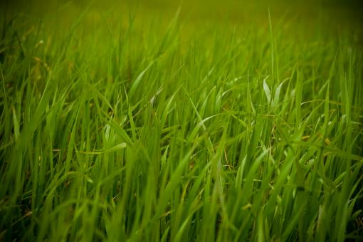 Green Grass - Free Stock Photo