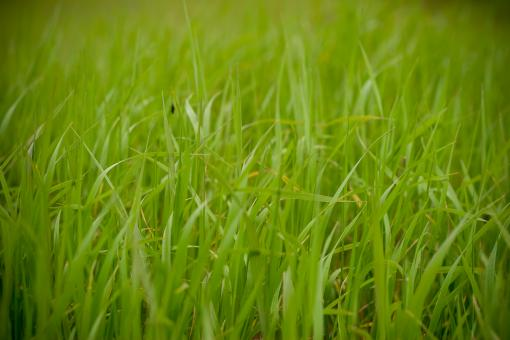Green Grass Field - Free Stock Photo