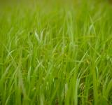 Free Photo - Green Grass Field