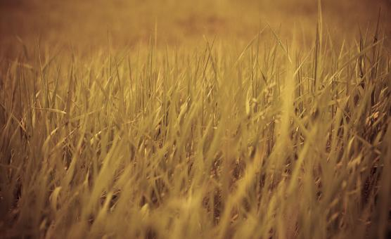 Grass Field Background - Free Stock Photo