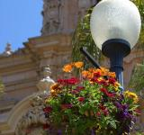 Free Photo - Light pole and flowers