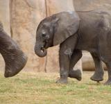 Free Photo - Small elephant