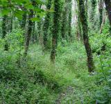 Free Photo - Green Woods