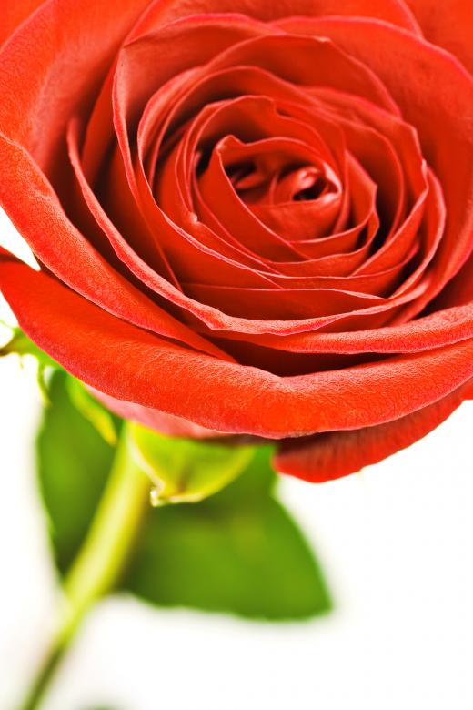 Free Stock Photo of Red rose  Created by 2happy