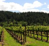 Free Photo - Napa Vineyard 3