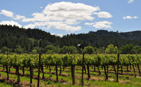 Napa Vineyard 2 - Free Stock Photo
