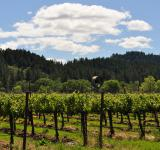 Free Photo - Napa Vineyard 2