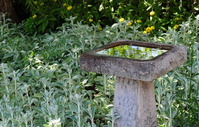 Free Stock Photo of Bird Bath Created by Rachael Towne