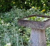 Free Photo - Bird Bath