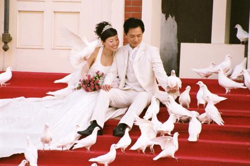 free wedding stock photos