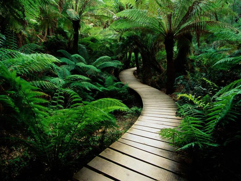 Free Stock Photo of Path in Nature Created by Prashant Chandrakant Gorule