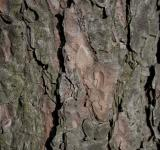 Free Photo - Tree bark