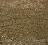 Free Photo - Mud background
