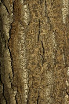 Tree Bark Background - Free Stock Photo