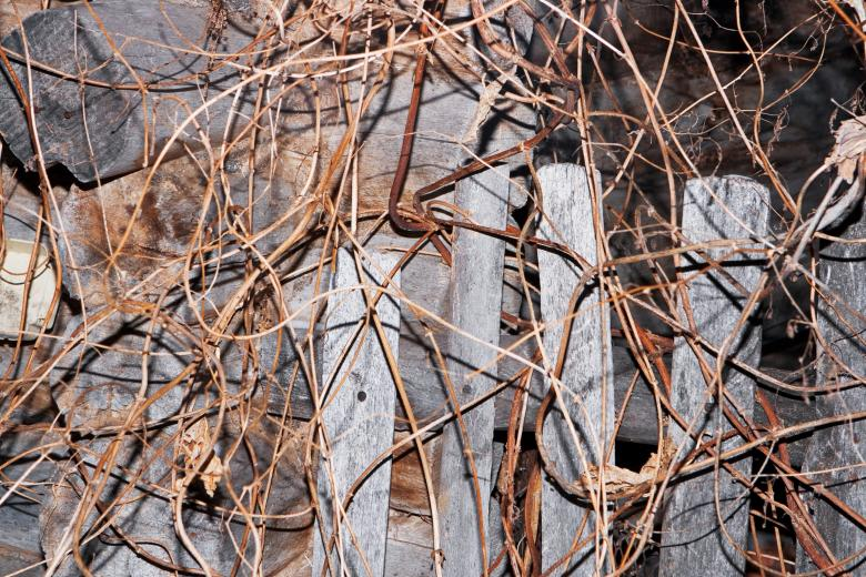 Free Stock Photo of Twigs background Created by 2happy