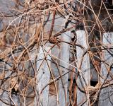 Free Photo - Twigs background