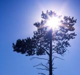 Free Photo - Sun and tree