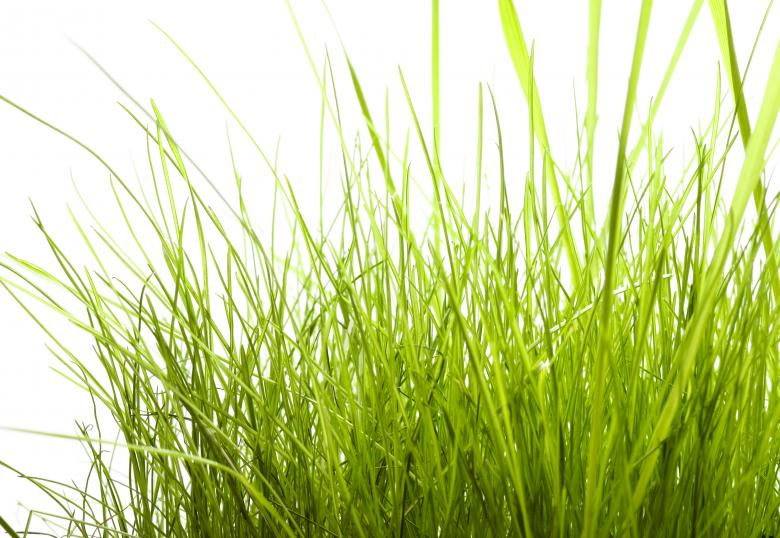 Free Stock Photo of Grass  Created by 2happy