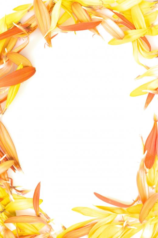 Free Stock Photo of Frame from Flower Petals Created by 2happy