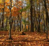 Free Photo - autumn scene
