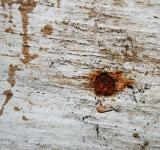 Free Photo - Dirty Grunge Wood