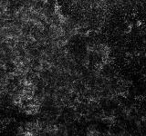Free Photo - Grunge Noise Texture