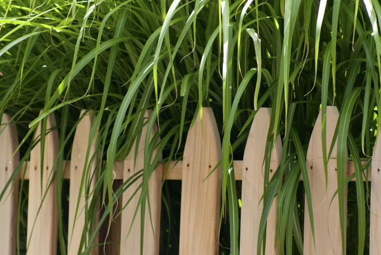 Free Stock Photo of Tall Grass Created by Brian Norcross