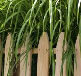 Free Photo - Tall Grass