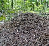 Free Photo - Anthill