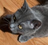 Free Photo - Gray cat
