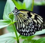 Free Photo - Butterfly Closeup