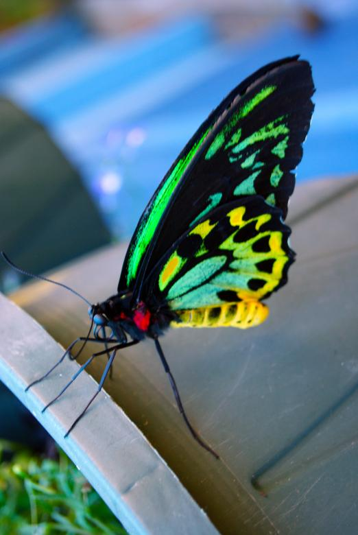 Free Stock Photo of Butterfly Closeup Created by Brian Norcross