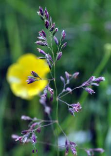 Download Wild Grass with Flower Free Photo