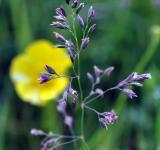 Free Photo - Wild Grass with Flower