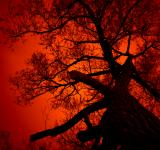 Free Photo - Nightmare Tree