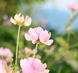Free Photo - spring flowers